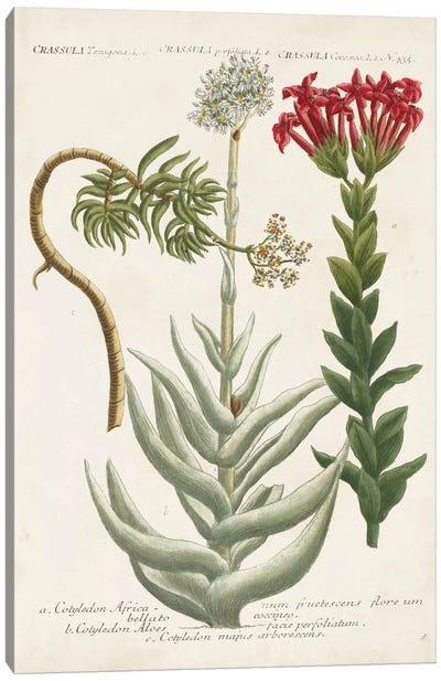 Botanical Varieties I Canvas Art Print