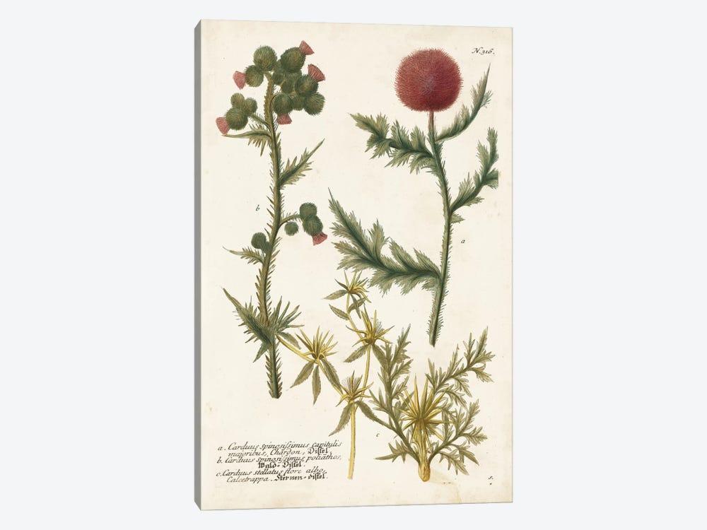 Botanical Varieties II by Johann Wilhelm Weinmann 1-piece Art Print