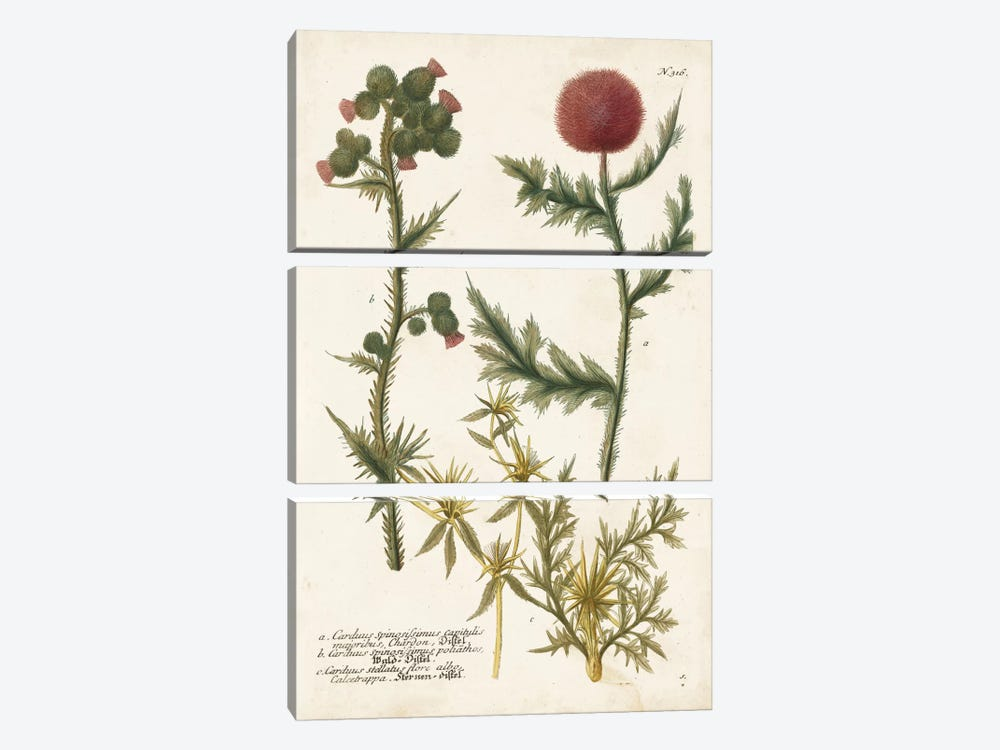 Botanical Varieties II by Johann Wilhelm Weinmann 3-piece Canvas Art Print