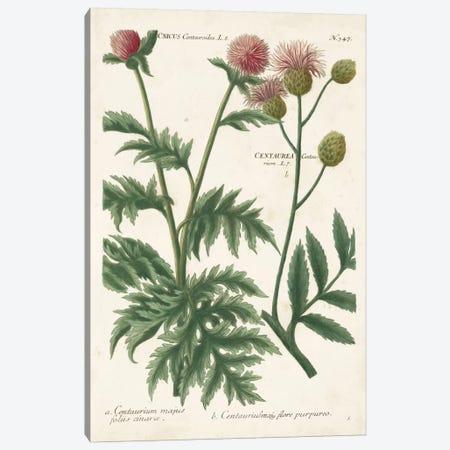Botanical Varieties III Canvas Print #JWW3} by Johann Wilhelm Weinmann Canvas Art