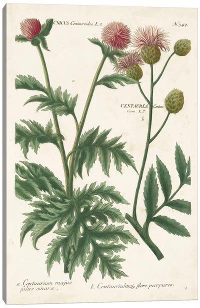 Botanical Varieties III Canvas Art Print