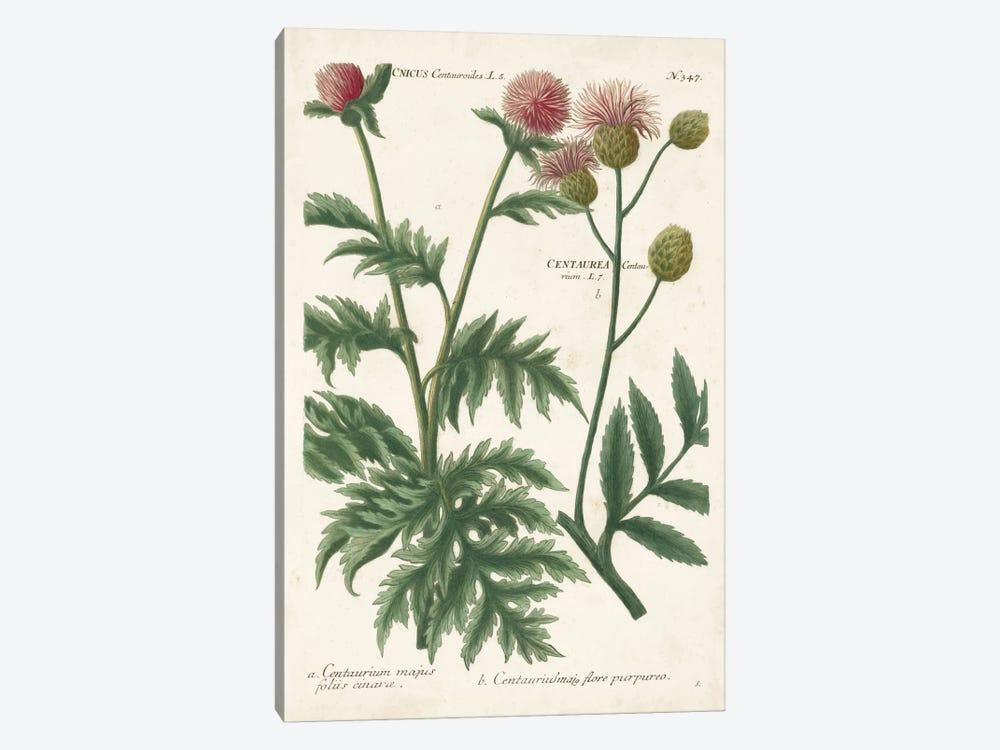 Botanical Varieties III by Johann Wilhelm Weinmann 1-piece Canvas Art