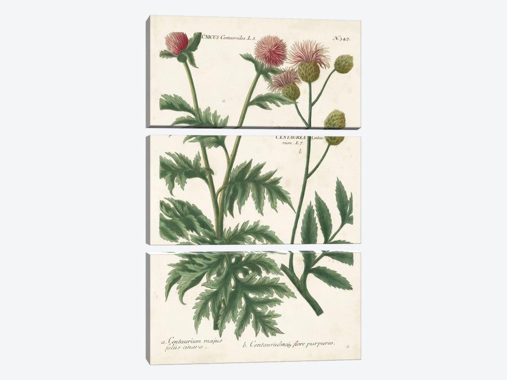 Botanical Varieties III by Johann Wilhelm Weinmann 3-piece Canvas Artwork