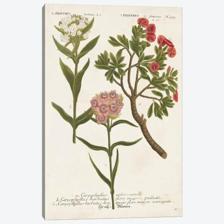 Botanical Varieties IV Canvas Print #JWW4} by Johann Wilhelm Weinmann Canvas Print