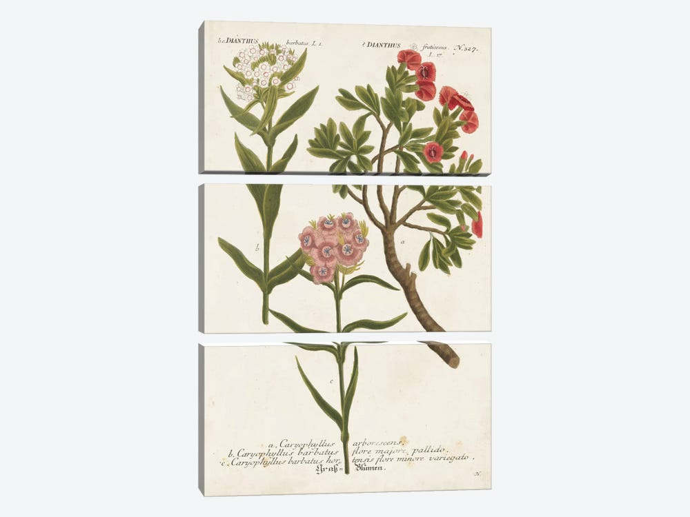 Botanical Varieties IV by Johann Wilhelm Weinmann 3-piece Art Print
