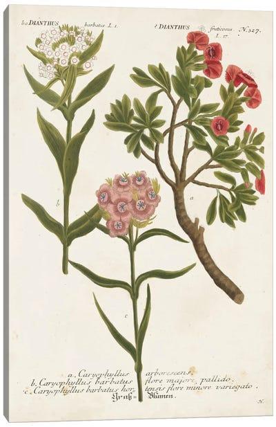 Botanical Varieties IV Canvas Art Print
