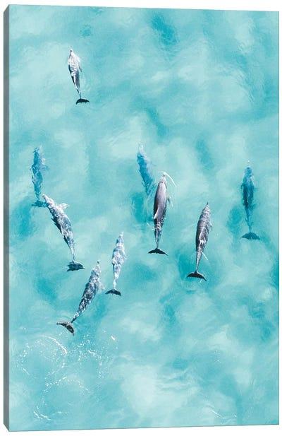 Cruisy Dolphins III Canvas Art Print