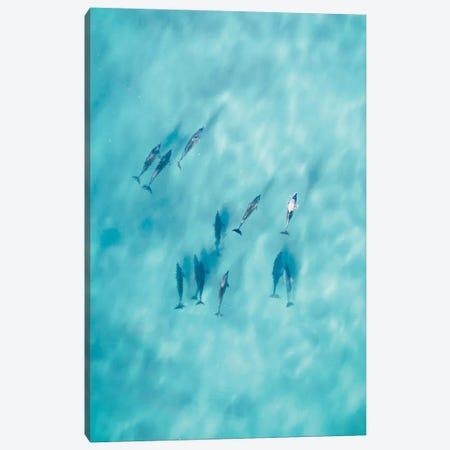 Cruisy Dolphins VI Canvas Print #JXR12} by Jaxon Roberts Canvas Art Print