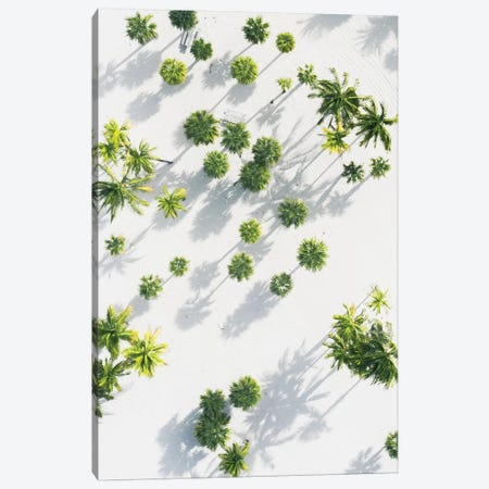 Palm Tree Paradise High Res Canvas Print #JXR41} by Jaxon Roberts Canvas Artwork