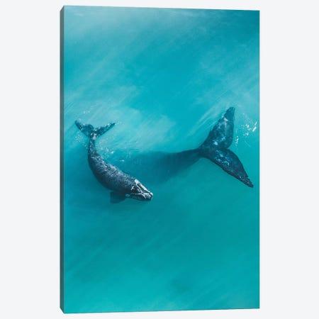 Peaceful Whales II Canvas Print #JXR43} by Jaxon Roberts Canvas Artwork