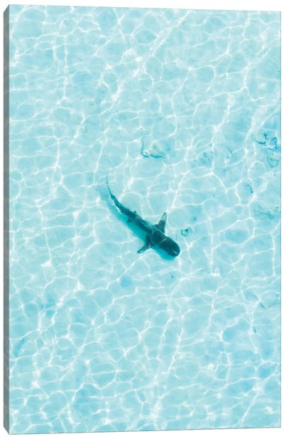Shark In The Shallows Canvas Art Print