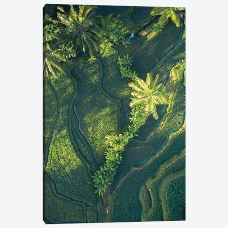 Bali Rice Paddies Canvas Print #JXR5} by Jaxon Roberts Art Print