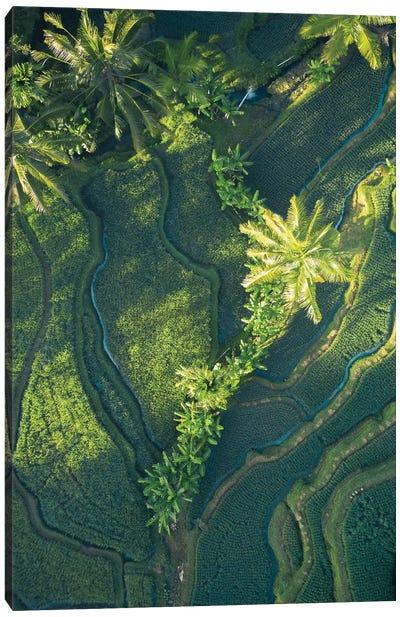 Bali Rice Paddies Canvas Art Print