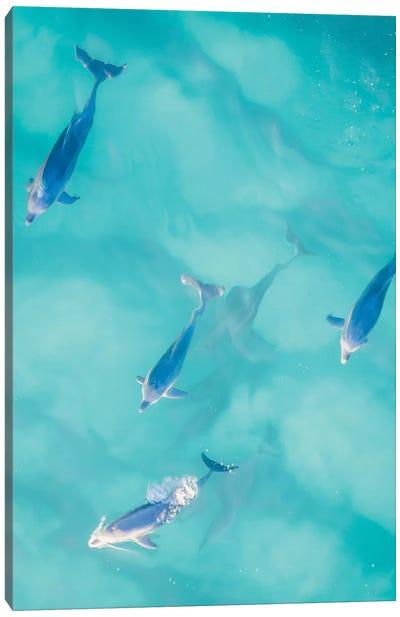 Cruisy Dolphins I Canvas Art Print