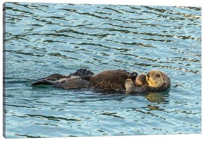 Usa, California, San Luis Obispo County. Sea Otter Mom And Pup. Canvas Art Print