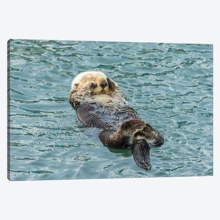Usa, California, San Luis Obispo County. Sea Otter Sleeping. Canvas Print #JYG1023} by Jaynes Gallery Art Print