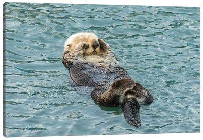 Usa, California, San Luis Obispo County. Sea Otter Sleeping. Canvas Art Print