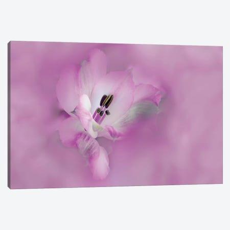 Usa, California. Close-Up Of Alstroemeria Flower. Canvas Print #JYG1038} by Jaynes Gallery Canvas Wall Art