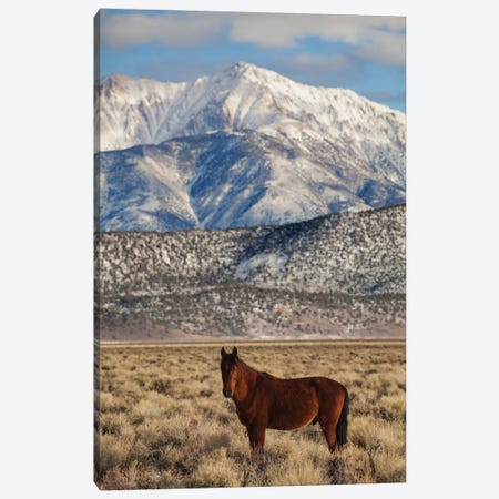 Usa, California. White Mountains And Wild Mustang In Adobe Valley. Canvas Print #JYG1049} by Jaynes Gallery Canvas Print