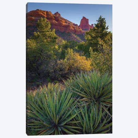 USA, Arizona, Sedona. Landscape with rock formation and cacti. Canvas Print #JYG1060} by Jaynes Gallery Canvas Art Print