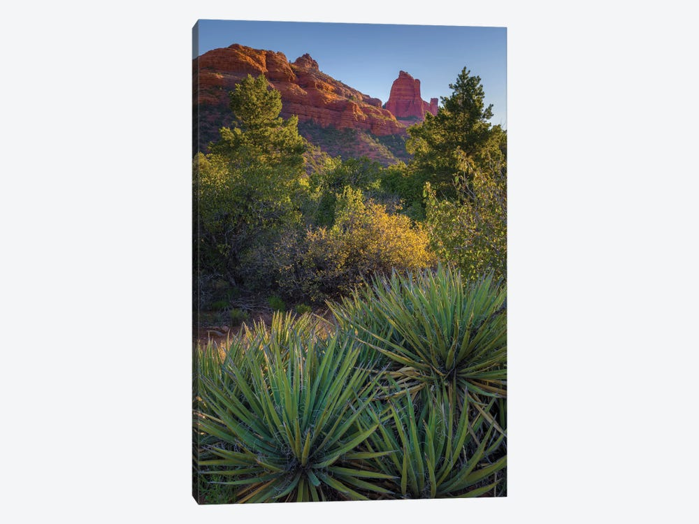 USA, Arizona, Sedona. Landscape with rock formation and cacti. by Jaynes Gallery 1-piece Canvas Print