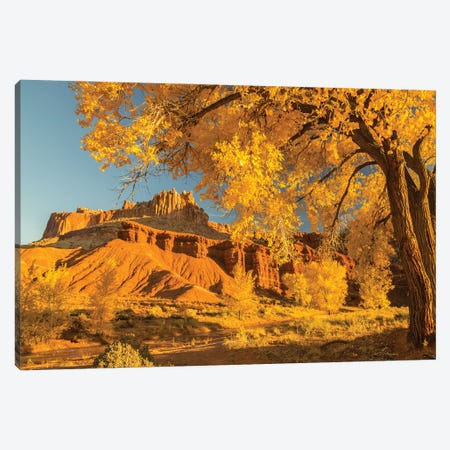 USA, Utah, Capitol Reef National Park. Cottonwood trees and The Castle rock formation. Canvas Print #JYG1066} by Jaynes Gallery Canvas Artwork