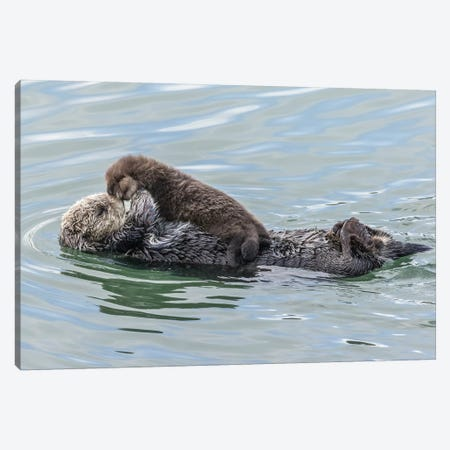 USA, California, San Luis Obispo County. Sea otter mother and pup. Canvas Print #JYG106} by Jaynes Gallery Canvas Art Print