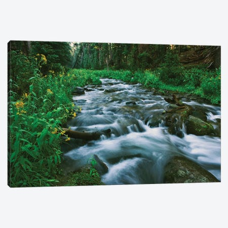 USA, California. Scenic of Coldwater Creek. Canvas Print #JYG123} by Jaynes Gallery Canvas Wall Art