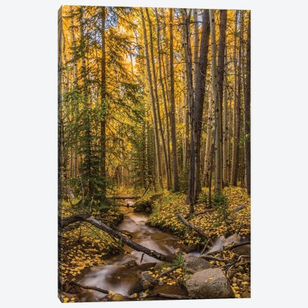 USA, Colorado, Rocky Mountain National Park. Waterfall in forest scenic I Canvas Print #JYG125} by Jaynes Gallery Canvas Print