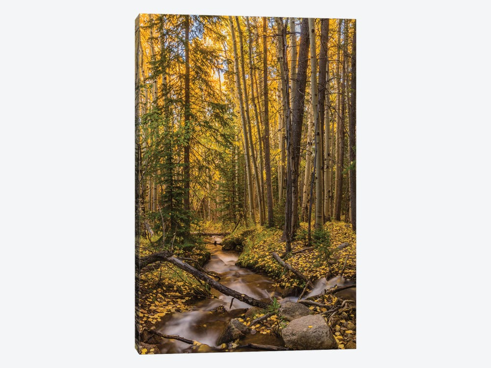 USA, Colorado, Rocky Mountain National Park. Waterfall in forest scenic I by Jaynes Gallery 1-piece Canvas Artwork