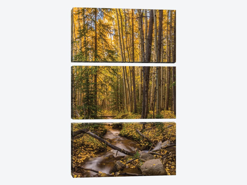 USA, Colorado, Rocky Mountain National Park. Waterfall in forest scenic I by Jaynes Gallery 3-piece Canvas Art