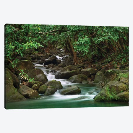USA, Hawaii, Kauai. Creek in a rainforest. Canvas Print #JYG134} by Jaynes Gallery Canvas Wall Art