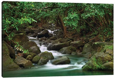 USA, Hawaii, Kauai. Creek in a rainforest. Canvas Art Print