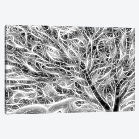 USA, Oregon. Black and white abstract of sea fan. Canvas Print #JYG151} by Jaynes Gallery Canvas Art Print