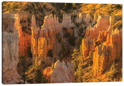 USA, Utah, Bryce Canyon National Park. Canyon overview. Canvas Art Print