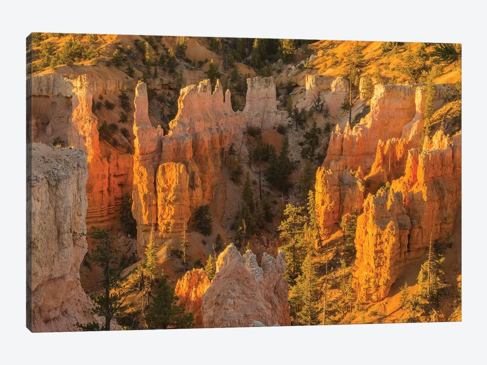 USA, Utah, Bryce Canyon National Park. Canyon overview. by Jaynes Gallery 1-piece Art Print