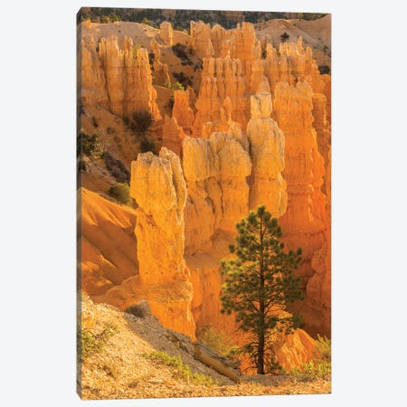 USA, Utah, Bryce Canyon National Park. Rock formations. Canvas Print #JYG157} by Jaynes Gallery Canvas Art
