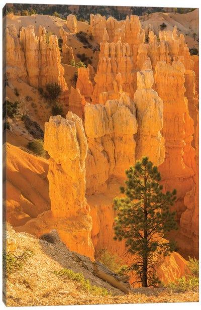 USA, Utah, Bryce Canyon National Park. Rock formations. Canvas Art Print