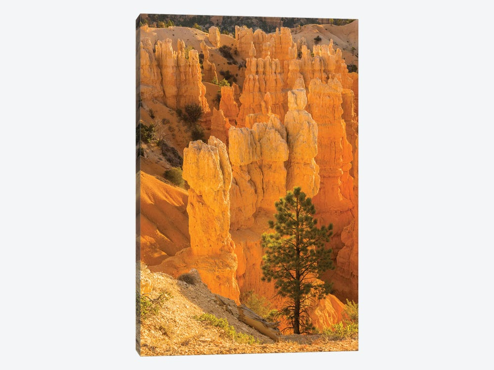 USA, Utah, Bryce Canyon National Park. Rock formations. by Jaynes Gallery 1-piece Art Print