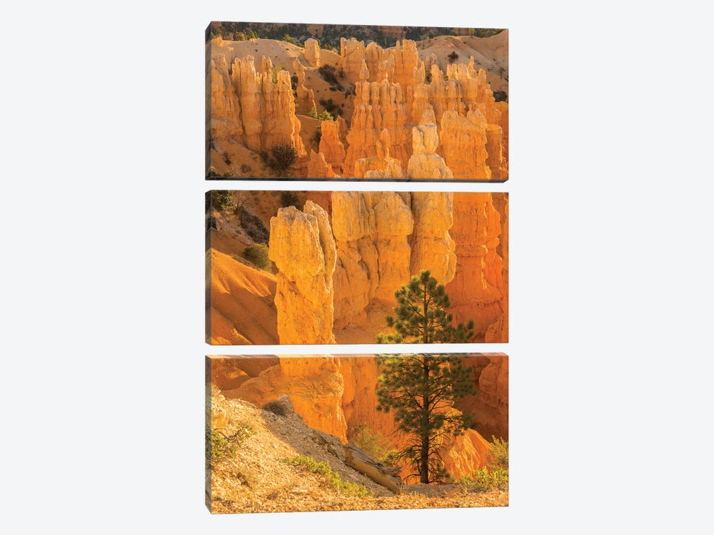 USA, Utah, Bryce Canyon National Park. Rock formations. by Jaynes Gallery 3-piece Art Print