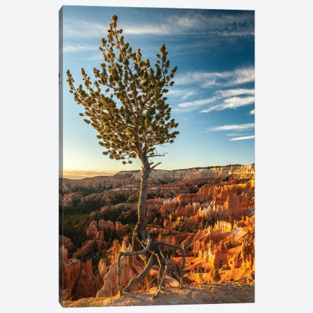 USA, Utah, Bryce Canyon National Park. Sunrise on ponderosa pine and canyon. Canvas Print #JYG159} by Jaynes Gallery Canvas Print
