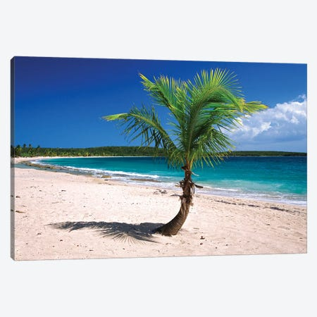 Caribbean, Puerto Rico, Vieques. Lone coconut palm on Red Beach. Canvas Print #JYG16} by Jaynes Gallery Canvas Wall Art