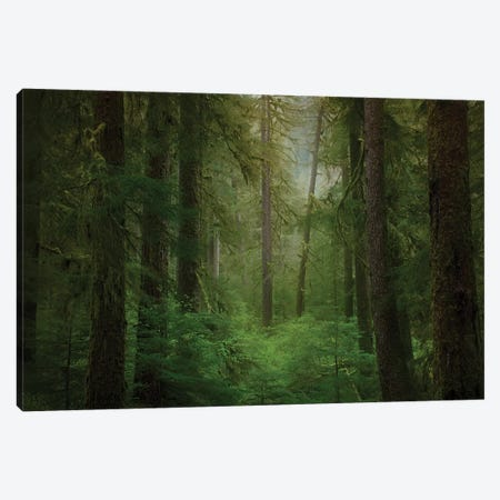 USA, Washington State, Olympic National Park. Western hemlock trees in rainforest. Canvas Print #JYG172} by Jaynes Gallery Canvas Print