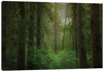 USA, Washington State, Olympic National Park. Western hemlock trees in rainforest. Canvas Art Print