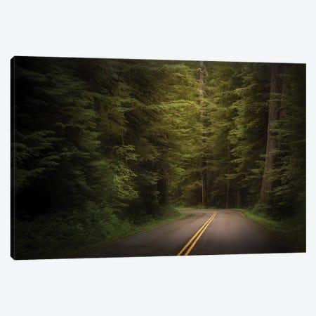 USA, Washington State, Olympic National Park. Western hemlock trees line road. Canvas Print #JYG173} by Jaynes Gallery Canvas Print