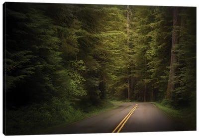 USA, Washington State, Olympic National Park. Western hemlock trees line road. Canvas Art Print
