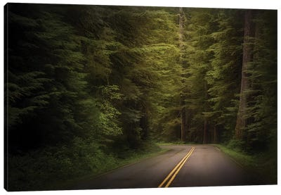 USA, Washington State, Olympic National Park. Western hemlock trees line road. Canvas Art Print