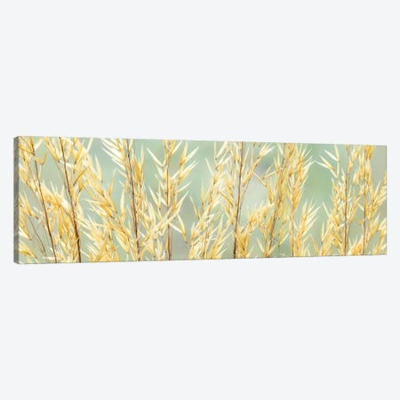 USA, Washington State, Seabeck. Seed heads of giant feather grass. 3-Piece Canvas #JYG193} by Jaynes Gallery Canvas Print