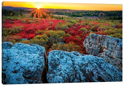 USA, West Virginia, Dolly Sods Wilderness Area. Sunset on tundra and rocks. Canvas Art Print