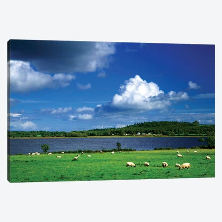Ireland, County Roscommon. Pastoral Scene Of Lake And Grazing Sheep. Canvas Print #JYG207} by Jaynes Gallery Canvas Art